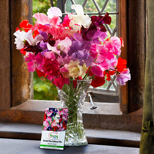 Super Fragrant Sweet Pea Collection