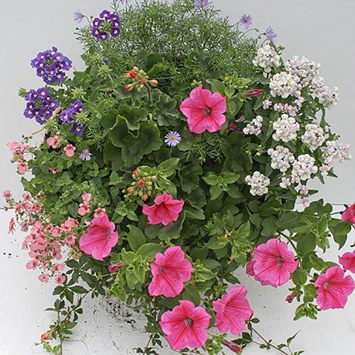 Designer Mix Pre-Planted Basket