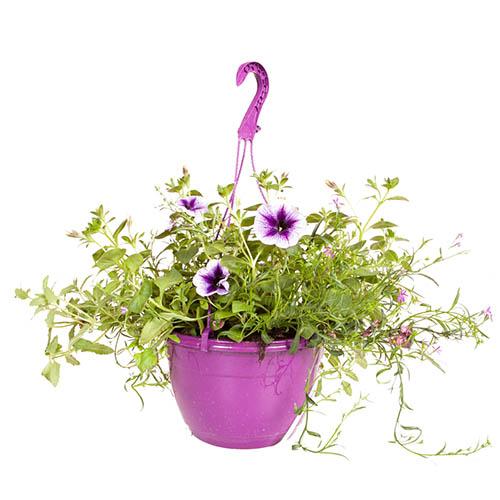 'Parma Violet' Pre-Planted Basket