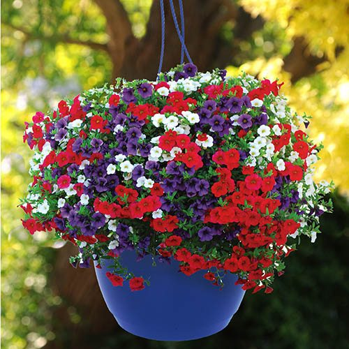 Pair of Patriot Mix' Pre-Planted Baskets