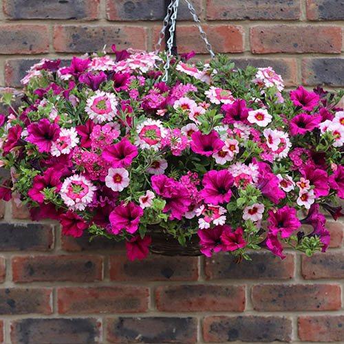 Eton Mess Pre-Planted Baskets