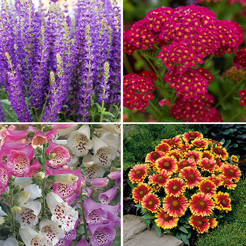 Complete Hardy Garden Perennial Collection