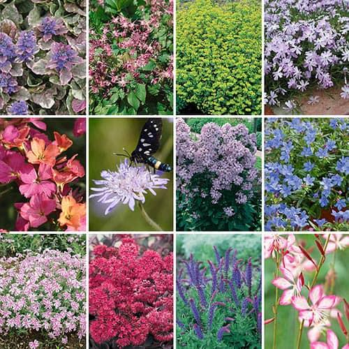 Garden Ready Hardy Perennial Collection