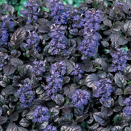 Alpine Plant Collection