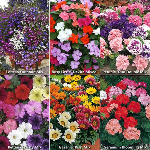 Super Value Bedding Plants