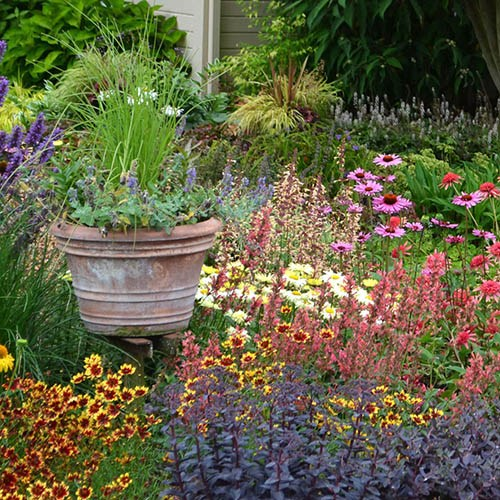 Perennial Plug plant bundle