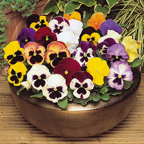 120 Autumn Bedding Plant Bundle