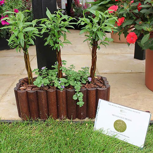 Willow Wand Small 50cm in 7.5 Fabric Planter