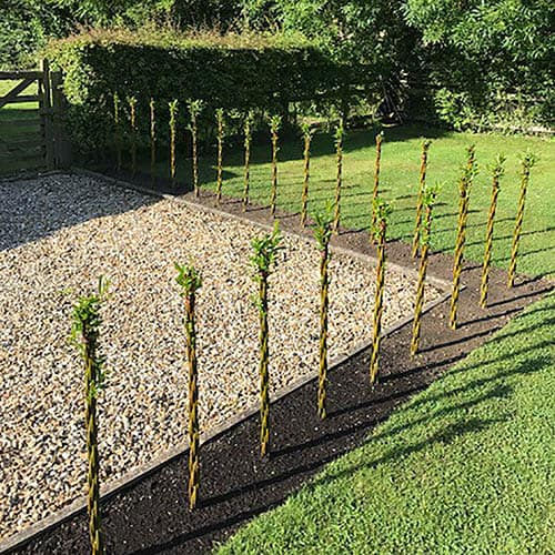 Pair of Willow Wands - Large