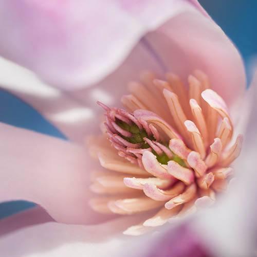 Magnolia Leonard Messell Bush