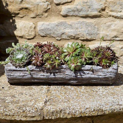 Pre-planted Sempervivum Log