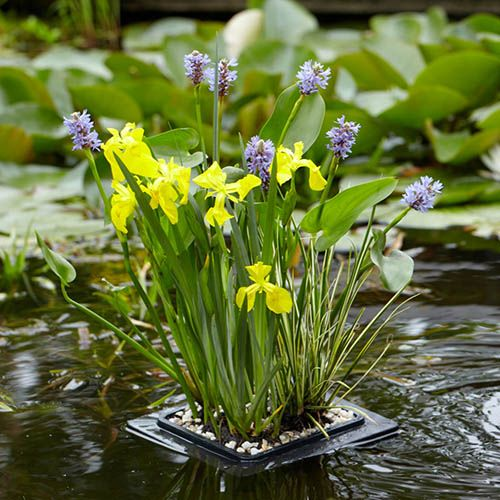 Floating Pond Plant Raft