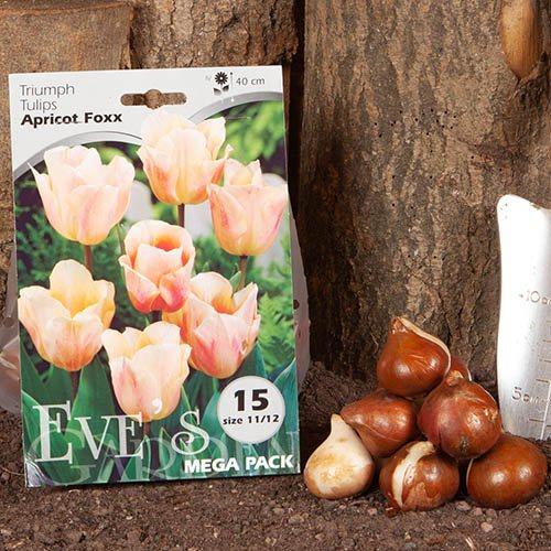Tulip Apricot Foxx