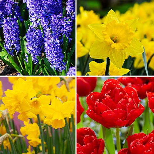 Bold and Beautiful Bulb Collection of 63 bulbs