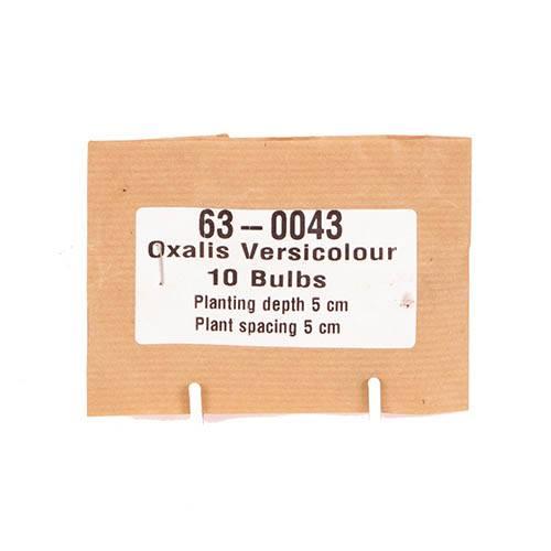 Oxalis versicolour