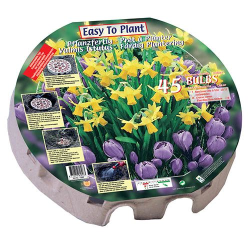 Classic Planter pack - Narcissus & Crocus 45 bulbs