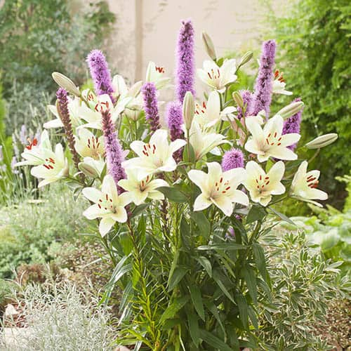 Plant-O-Mat Lilium and Liatris Kit