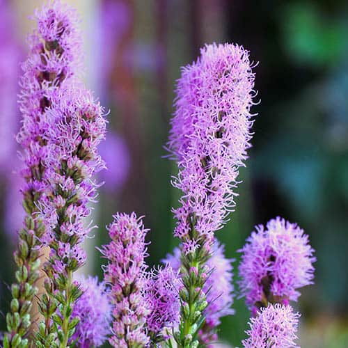 Plant-O-Mat Calla and Liatris Kit