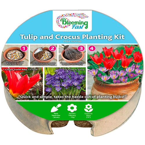 Blooming Fast Drop In Bulb Planter Tulip And Crocus Kit Yougarden