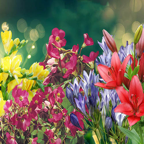 Summer Flowering Balcony Plant o Mat 38 bulbs