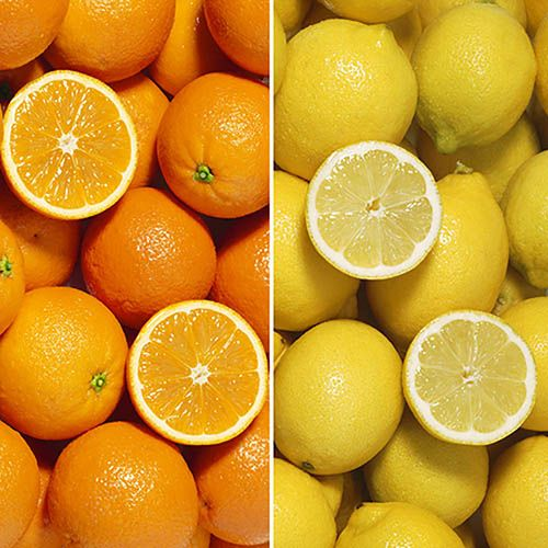 Orange & Lemon Collection with Feed