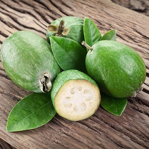 Pineapple Guava - Acca selloweana