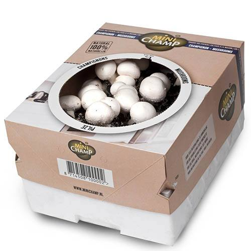 Mushroom Kit - White Button Mushrooms