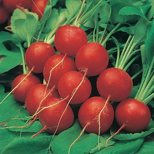 Radish Scarlet Globe packet Seeds