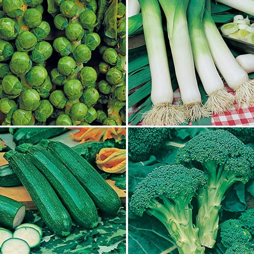 Greens Vegetable Seed Collection