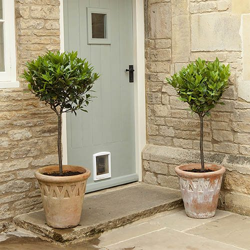 Pair of Full Standard Bay Trees