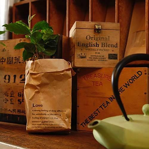 Camellia sinensis - Tea Plant