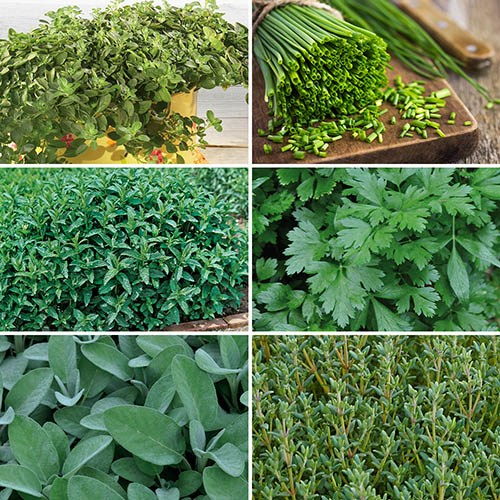 Mixed Herb Collection Grow Your Own