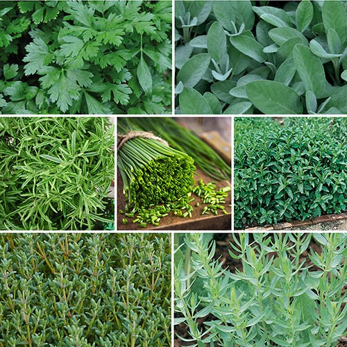 Mixed Herb Collection