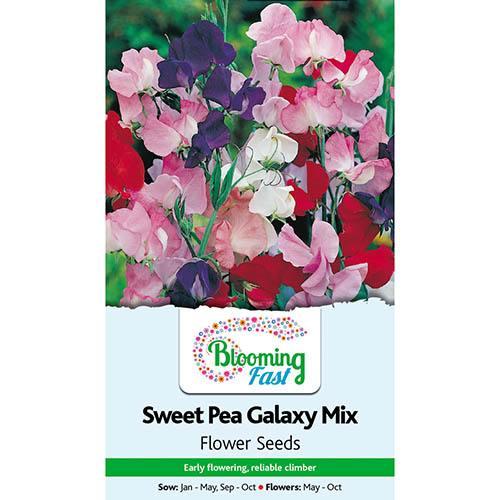 Sweet Pea Galaxy Seeds