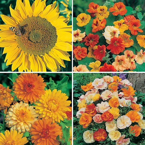 Bright Sunshine Seed Collection