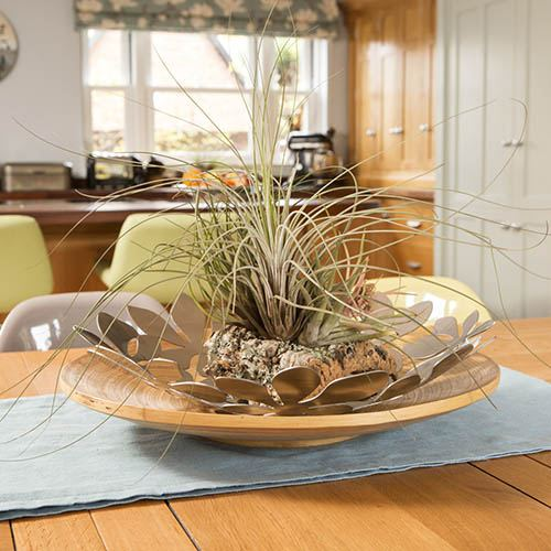 Ultimate Cork Air Plant Kit