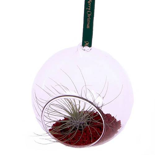 Living Christmas Bauble Hanging Globe Air Plant Terrarium