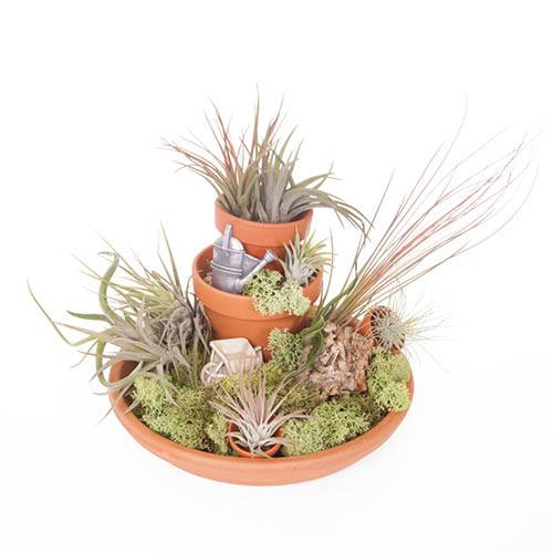 Secret Garden Air Plant Kit