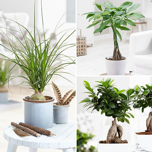 Asian Inspirations Houseplant Mix 3 x 13cm zinc pot