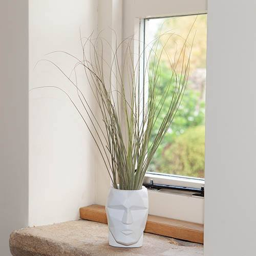 Giant Airhead Airplant Kit