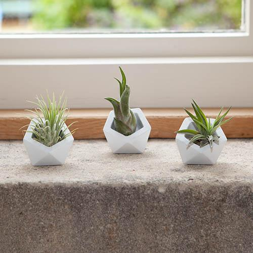 Geometric Trio Air Plant Kit
