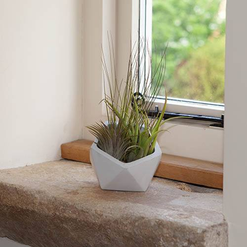 GeoConcrete Airplant Kit