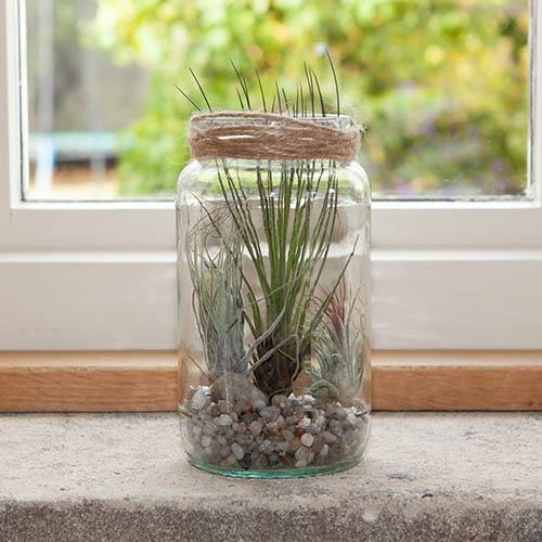 Urban Garden in a Jar Airplant Kit