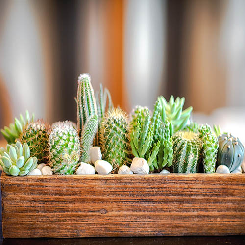 Indoor Cactus Mix