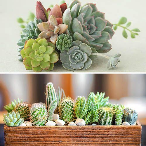 Indoor Houseplant Mix, 6 Succulents & 6 Cacti