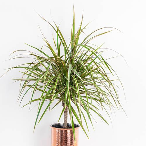 Houseplant Mix 6 Plants