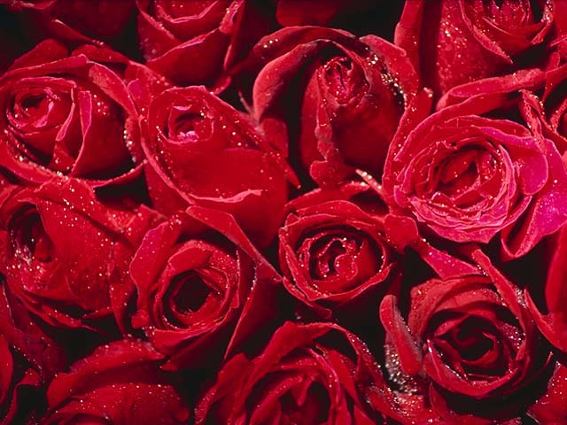 http://store.zcubes.com/0A41ABC933424E178D160E4B4E2C83D0/Uploaded/roses.jpg