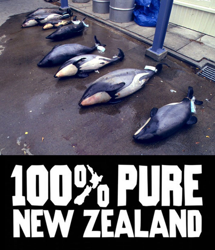 Trade Union Representative >> New Zealand Government Willfully Allowing Extinction of Native Dolphins - Conscious Living TV