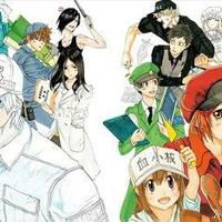 Cells at Work!