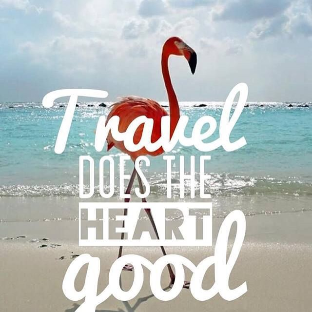 TRAVEL // GET LOST #wanderlust #luvsurf #flamingo #beach #travel #learn #explore